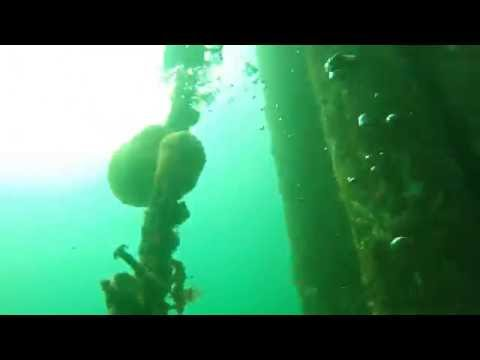 Invert Transplant Dive at Maury Island Barges, Washington