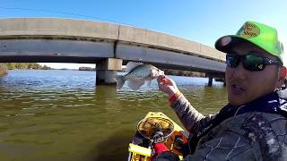 High Rock Lake have TOO MUCH CRAPPIES! 100+