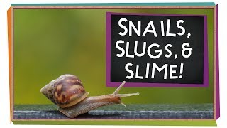 Snails, Slugs, and Slime!