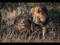 ezekiel mutua says maasai mara gay lions should be counselled 10over10