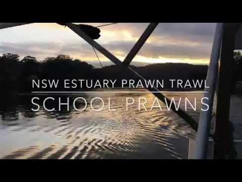 Prawn Trawling – New South Wales