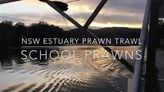 Prawn Trawling - New South Wales