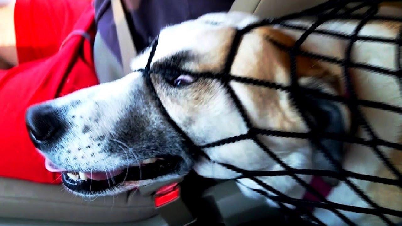 ПРИКОЛЫ С ЖИВОТНЫМИ 😺🐶 Смешные Животные Собаки Смешные Коты Приколы с котами Забавные Животные #114