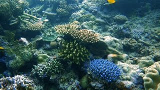Science Today: A Mini City Underwater | California Academy of Sciences thumbnail