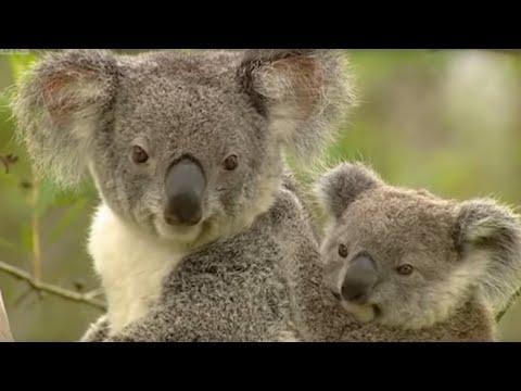 Artificial Insemination Animals