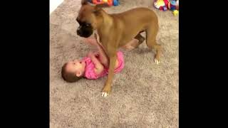 Video that will make your day !!! (Dogs And Babies interaction)