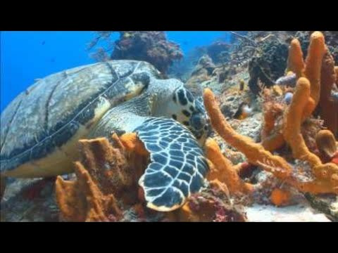Exploring the Coral Reef: Learn about Oceans for Kids - FreeSchool 2018