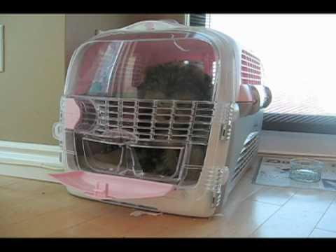 Houdini Puppy Escapes Crate