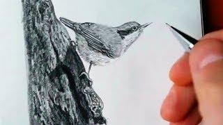 Как нарисовать ПТИЧКУ КАРАНДАШОМ! Учимся рисовать Птичку Простым Карандашом! Как Научиться РИСОВАТЬ