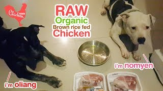 pit bull eats organic chicken [ASMR] 動物の咀嚼音 Today menu is Ben...