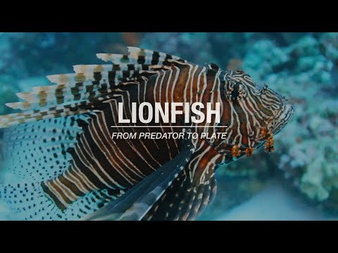 Lionfish: From Predator to Plate