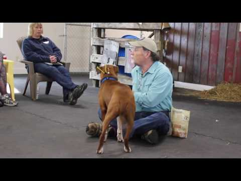 Gary Wilkes Bonking Video, Dog Training, Solid K9 Training