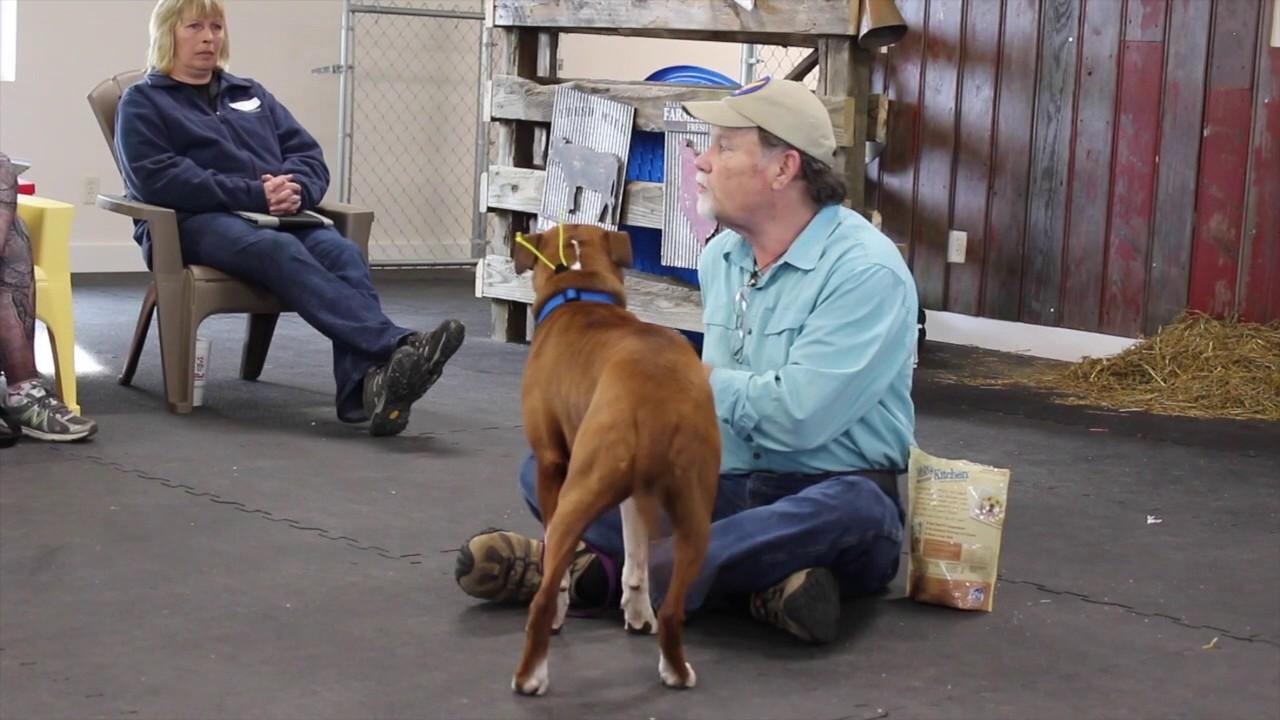 Gary Wilkes Bonking Video Dog Training Solid K9 Training