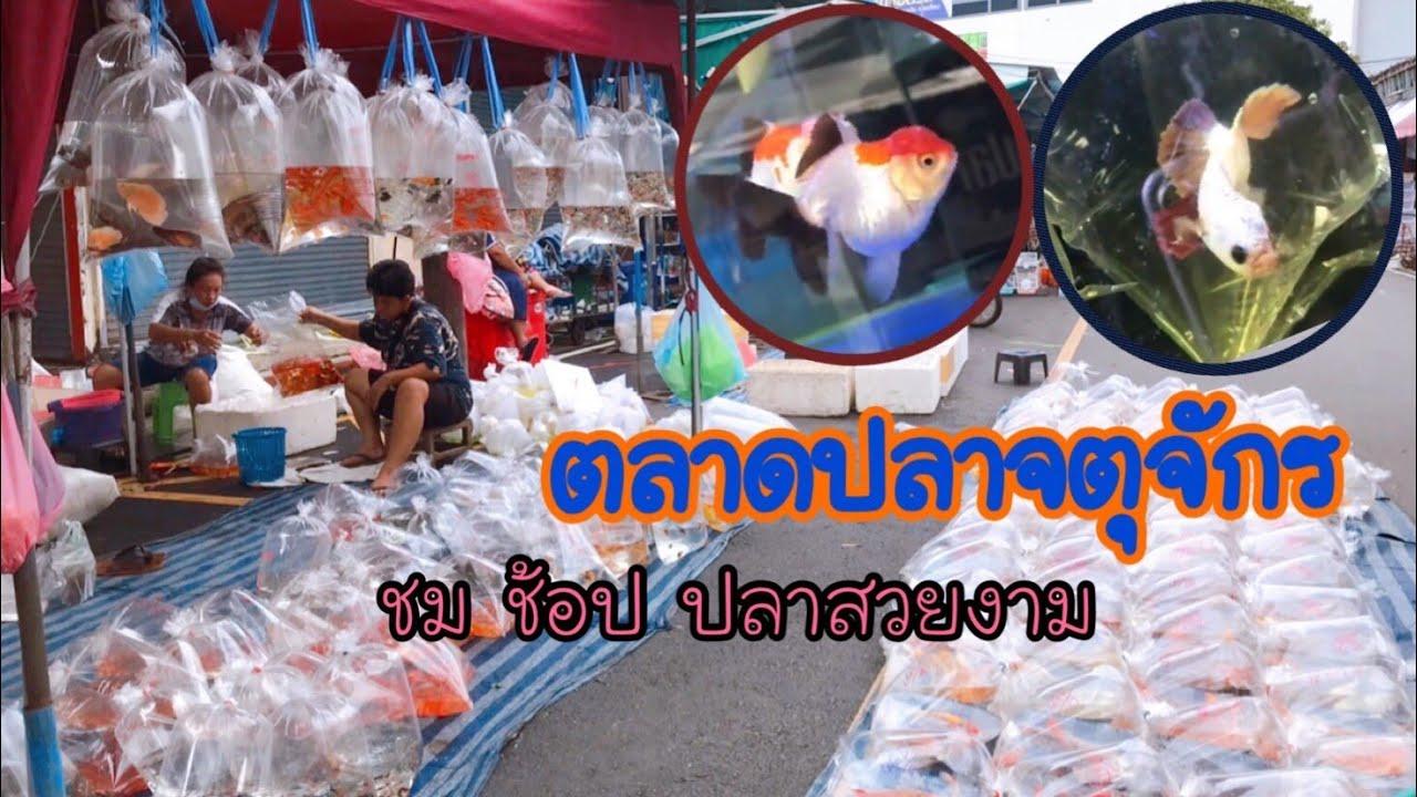 ตลาดปลาจตุจักร เที่ยว ชม ช้อป ปลาสวยงาม