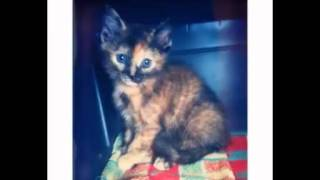 Beautiful photos kittens 6! Красивые фото котят 6!