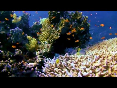 Underwater - Journey to the Red Sea Coral Reef