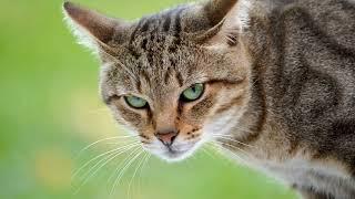 Какими болезнями можно заразиться от кошек?