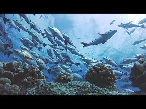 Rangiroa Island Atoll Scuba Diving Tiputa Pass