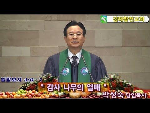 20191117  김해활천교회 박성숙담임목사  감사 나무의 열매