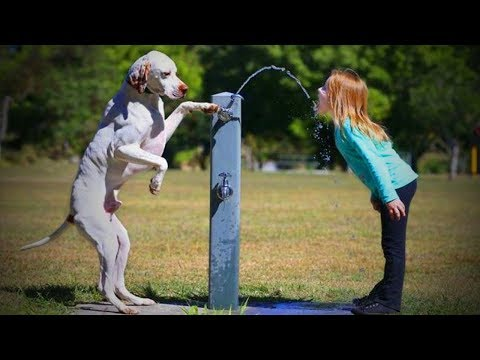 Helpful Dogs 🐶🐕 Funny Dogs Help [Funny Pets]