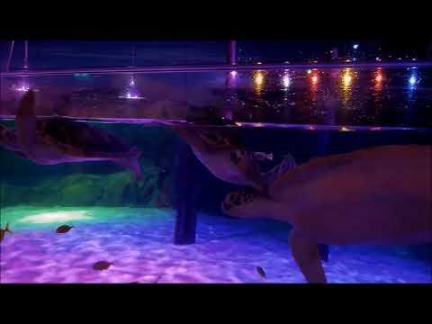 Siam Paragon Sealife Bangkok