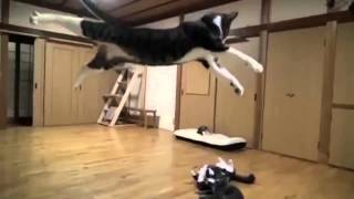 Dog vs Cat Fight Very Funny