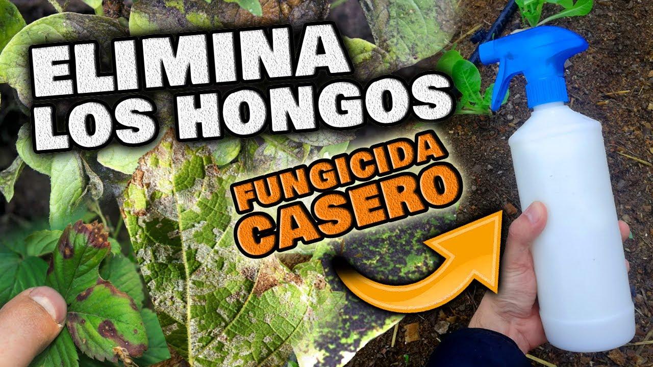 Elimina Y Controla Los Hongos De Tus Plantas Fungicida Casero Para Suculentas Y Rosales Youtube