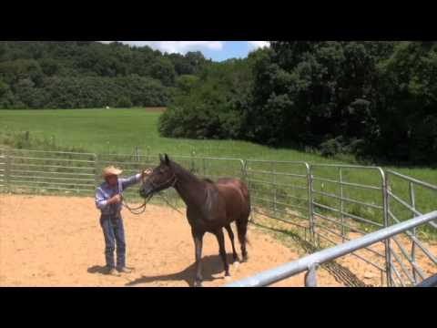 Aggresive mare part one