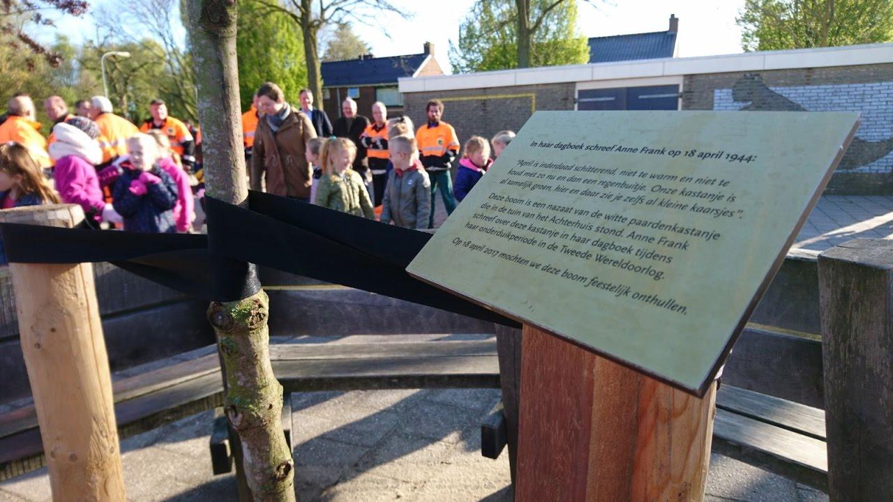 Citaten Uit Dagboek Anne Frank : Nieuwe stek echte anne frankboom terug in doesburg liemers