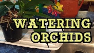 ORCHID CARE: TIPS TO WATER AND FERTILIZE WINDOWSILL PHALAENOPSIS ORCHIDS