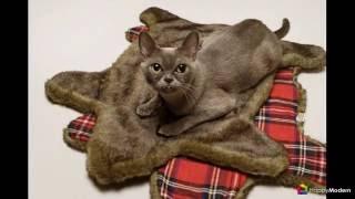 Делаем дом для кошки своими руками (50 фото) виды, материалы, инструкции