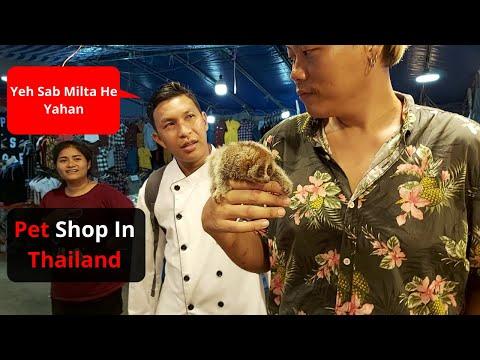 Pet Shop in Pattaya Thailand