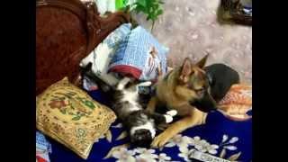 забавные животные. Борьба собаки с котом! lustige Tiere