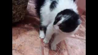 Принес домой котенка с улицы, первая встреча со старшим котом.