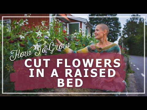 Cut Flowers in a Raised Bed – How to Grow