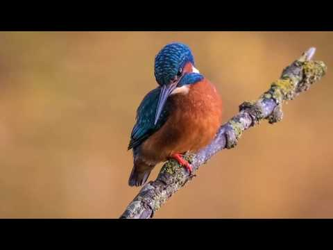 Wildlife Photography | Photographing Birds - Photograph Kingfishers