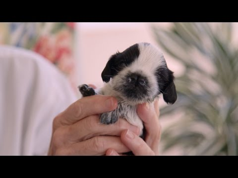 Cleft Palate Puppy Is Thriving After Surgery