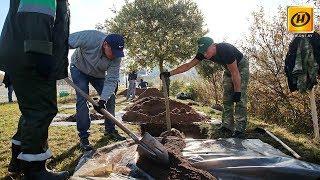 Не субботник, но тоже хорошо: акция «Чистый лес»