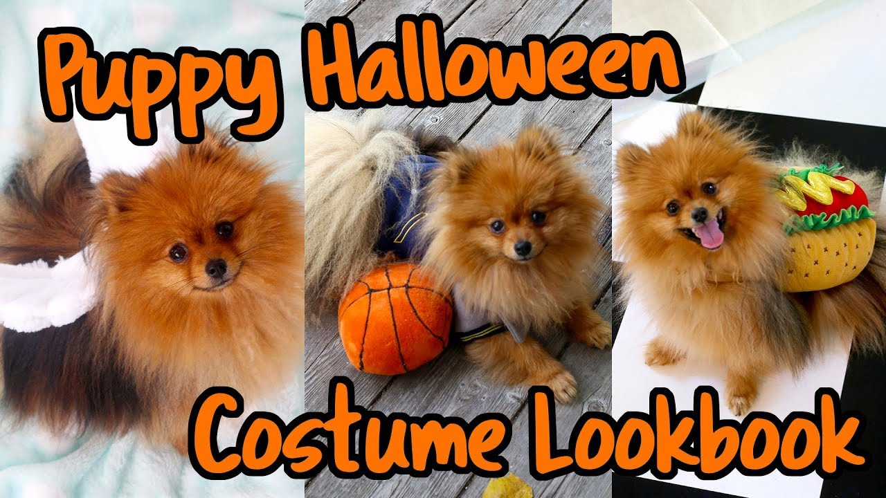 Costume Lookbook For Dogs