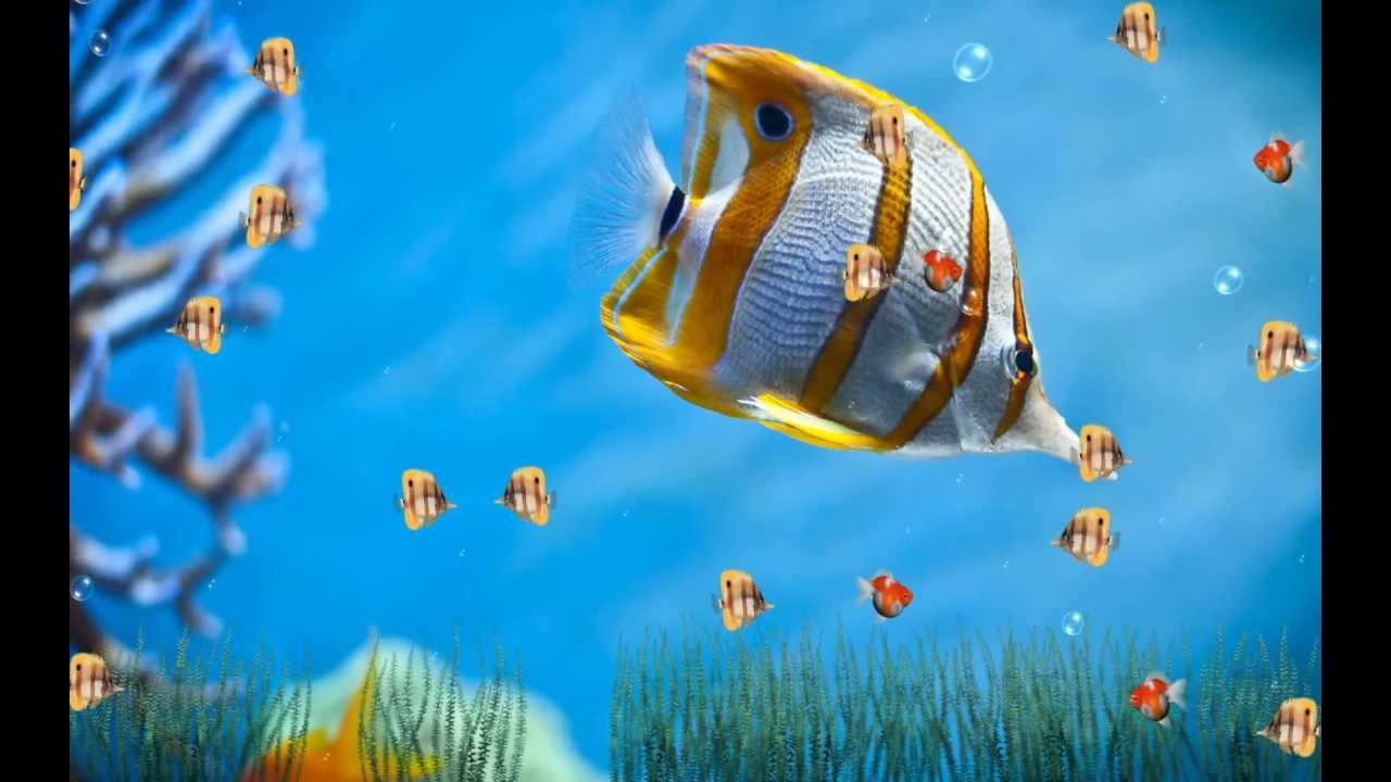 Animated Aquarium Wallpaper For Windows 7 Free Marine Life Aquarium Screensaver Http Www