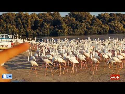 Ras Al Khor Wildlife Sanctuary- Flamingo Lagoon