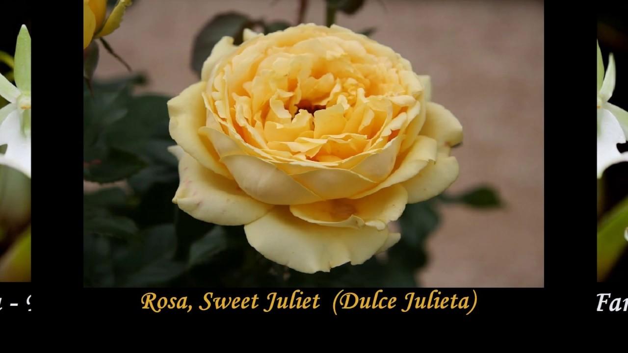 Nombres De Flores Raras Del Mundo Para Mis Amig S Dj Kikito Youtube