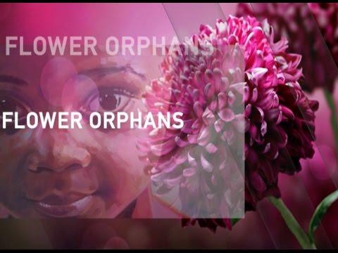 Orphans of the Naivasha flower farms
