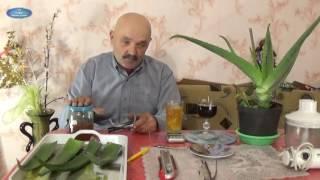 видео Алоэ вера (полезные свойства, применение, лечение, рецепты сока)