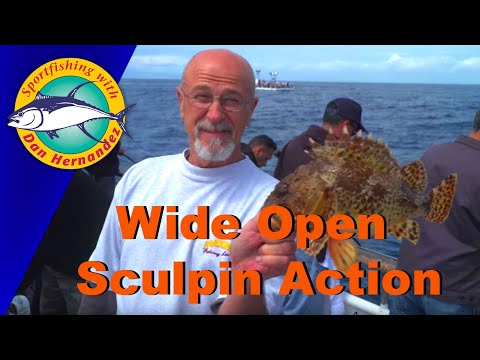 Wide Open Sculpin Fishing Aboard The City Of Long Beach