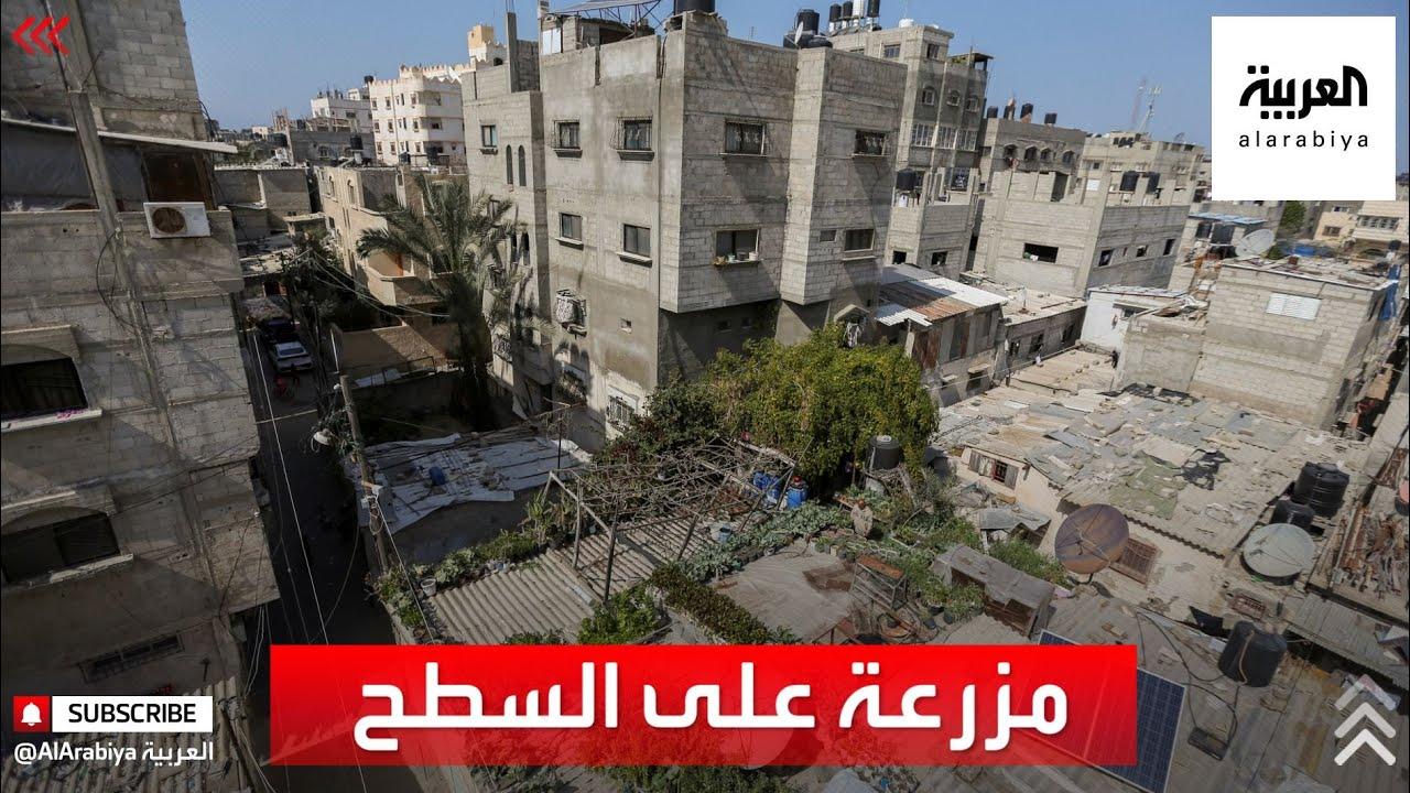 فلسطيني يحارب الفقر من سطح منزله  - نشر قبل 2 ساعة
