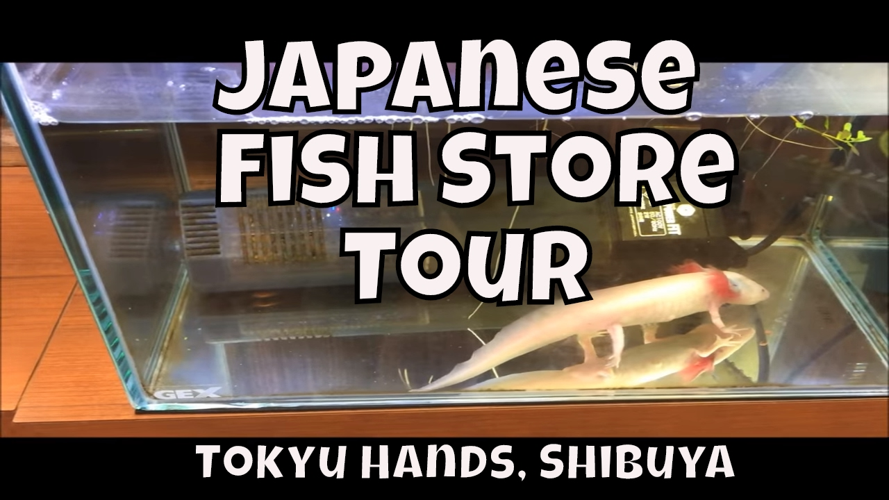 Japanese fish store tour Fish Store Japan #1 Shibuya Tokyu Hands Japan Fish  Store Tour