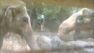 天王寺動物園アジアゾウ_挨拶と砂浴びを小さな窓から