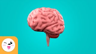 Educational video for children to learn what the brain is, which are its parts and how it works. is in charge of coordinating all vital functions o...