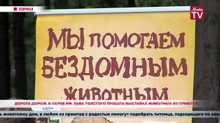 Дорога домой. В парке им. Льва Толстого прошла выставка животных из приютов. 19.08.19